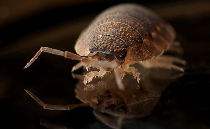生機源的滅蟲收費高嗎?是如何收費的?